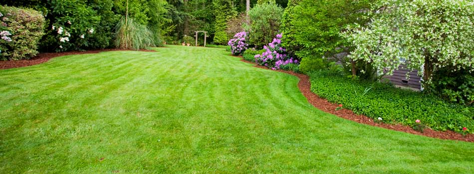 Back yard treated by 1.888.LawnTec with a Real Green Lawn Care program in Chatham, NJ.