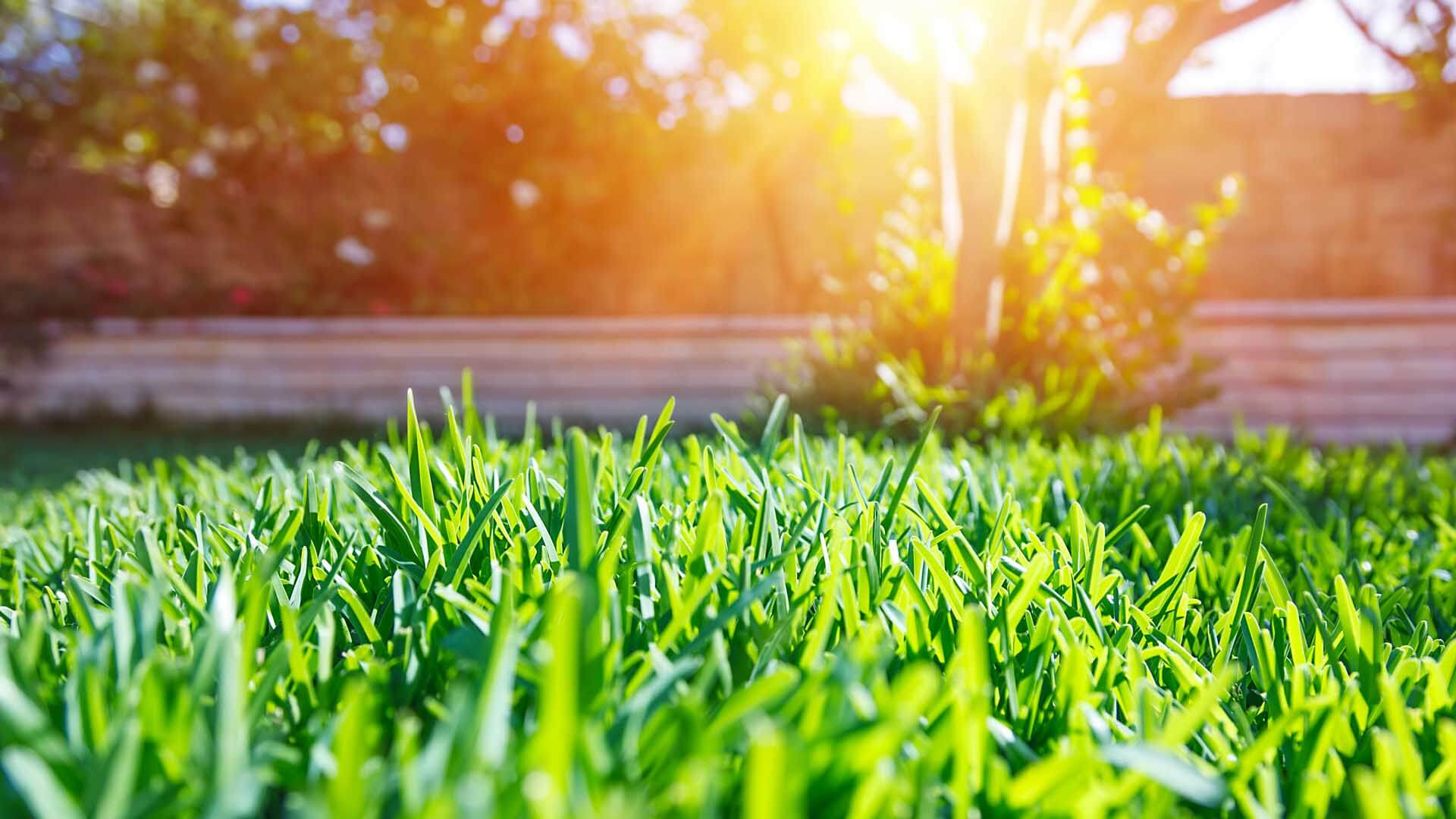 Grass with sunshine.