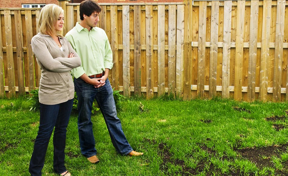 7 Reasons You Shouldn't Seed Your Lawn During Spring