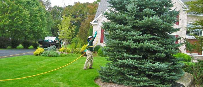 Employee of 1.888.LawnTec spraying tree for plant health.