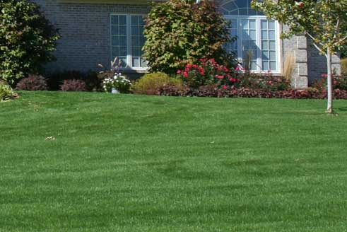 Lawn in Berkeley Heights, NJ with lawn care services from 1.888.LawnTec.