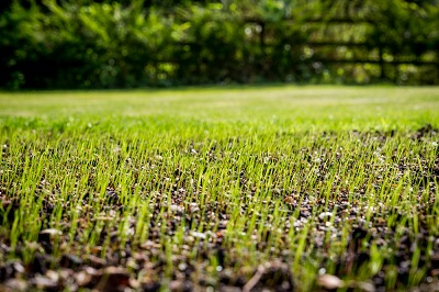 Lawn Renovations and Repair Services by 1.888.LawnTec